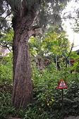 20190228臺中世界花卉博覽會(森林園區):DSC_8680.JPG