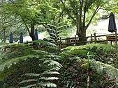 20080414苗栗縣綠葉方舟、東勢林場一日遊:20080414322.jpg