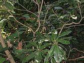 20090725新竹市高峰植物園參觀:IMG_1553.JPG