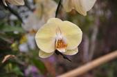 20181231臺中世界花卉博覽會(葫蘆墩公園):DSC_7894.JPG