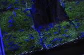 20170923-24-2017台灣觀賞魚博覽會、迪化街、大稻埕碼頭、華山1914文創園區:DSC_4899.JPG