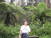 20060922南投縣溪頭之旅:IMG_0223.jpg