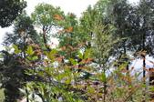20100314台中縣太平市酒桶山、仙女瀑布、蝙蝠洞之旅:DSC_0028.JPG