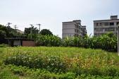 20120707苗栗縣苑裡鎮老街、有機稻場、金良興窯業一日遊:DSC_2607.JPG