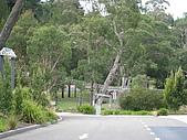 20090113-20澳洲蜜月旅行八日遊:IMG_0765.JPG