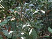 20090725新竹市高峰植物園參觀:IMG_1555.JPG