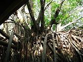 20091024-25二日遊Day2-4台南市樹屋&德記洋行:IMG_1090.JPG