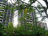 20090725新竹市高峰植物園參觀:IMG_1536.JPG