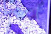 20170923-24-2017台灣觀賞魚博覽會、迪化街、大稻埕碼頭、華山1914文創園區:DSC_4882.JPG
