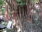 20091024-25二日遊Day2-4台南市樹屋&德記洋行:IMG_1084.JPG