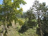 20061016南投縣杉林溪一日遊:IMG_0423.jpg