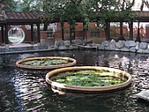 20081221台中市民俗公園參觀:IMG_0660.jpg