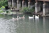 20100709台中縣大安鄉休閒農漁園區之旅:DSC_2735.JPG
