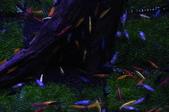 20170923-24-2017台灣觀賞魚博覽會、迪化街、大稻埕碼頭、華山1914文創園區:DSC_4893.JPG