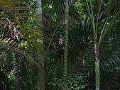 20090725新竹市高峰植物園參觀:IMG_1551.JPG