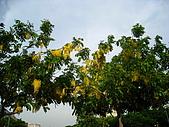 20090725新竹市高峰植物園參觀:IMG_1538.JPG