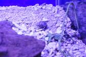 20170923-24-2017台灣觀賞魚博覽會、迪化街、大稻埕碼頭、華山1914文創園區:DSC_4881.JPG