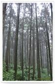 20120531-0601馬武督探索森林&拉拉山二日遊:DSC_2020.jpg