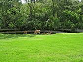 20080927苗栗縣飛牛牧場一日遊:IMG_0223.JPG
