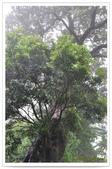 20120531-0601馬武督探索森林&拉拉山二日遊:DSC_2077.jpg