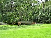 20080927苗栗縣飛牛牧場一日遊:IMG_0227.JPG