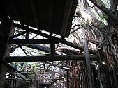 20091024-25二日遊Day2-4台南市樹屋&德記洋行:IMG_1093.JPG