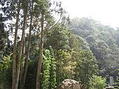20061016南投縣杉林溪一日遊:IMG_0424.jpg