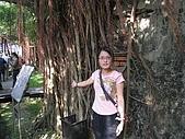 20091024-25二日遊Day2-4台南市樹屋&德記洋行:IMG_1081.JPG