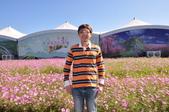20191117台中市新社花海(2019臺中國際花毯節):DSC_1326.JPG
