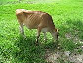 20080927苗栗縣飛牛牧場一日遊:IMG_0232.JPG