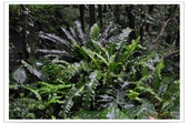 20120531-0601馬武督探索森林&拉拉山二日遊:DSC_2021.jpg