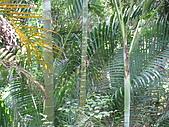 20090725新竹市高峰植物園參觀:IMG_1552.JPG