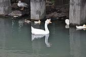 20100709台中縣大安鄉休閒農漁園區之旅:DSC_2737.JPG