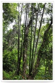 20120531-0601馬武督探索森林&拉拉山二日遊:DSC_2025.jpg