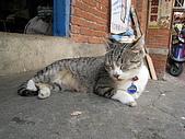 20081018-苗栗縣南庄.蓬萊之旅:IMG_0446.JPG