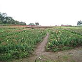 20100407桃園縣大溪鎮花海&後慈湖一日遊:IMG_0352.JPG