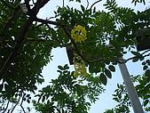20090725新竹市高峰植物園參觀:IMG_1534.JPG