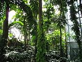 20081012台中市植物園參觀:IMG_0383.JPG