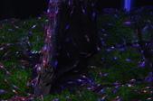 20170923-24-2017台灣觀賞魚博覽會、迪化街、大稻埕碼頭、華山1914文創園區:DSC_4897.JPG