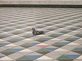 日本蜜月之旅(第二天):悠哉ㄉ鴿子~