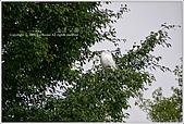 2009-02-17-南港公園:IMGP1794.JPG