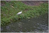 2009-02-17-南港公園:IMGP1809.JPG