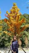 賞楓的另一個選擇;杉林溪 賞水杉:20161119_112916.jpg