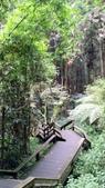杉中 綠步道:P_20170716_130947_HDR.jpg