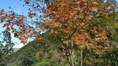 賞楓的另一個選擇;杉林溪 賞水杉:20161119_115511.jpg