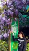 嘉義瑞里紫藤花季 賞花兼賞螢:2016-04-06 11.43.48.jpg