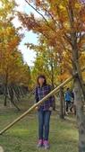 賞楓的另一個選擇;杉林溪 賞水杉:20161119_112715.jpg