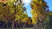 賞楓的另一個選擇;杉林溪 賞水杉:20161119_112824.jpg