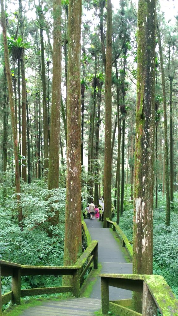 杉中 綠步道:P_20170716_131138_SRES.jpg