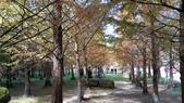 賞楓的另一個選擇;杉林溪 賞水杉:20161119_113322.jpg